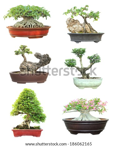 Set of trees in pots on white background - stock photo