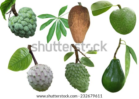 Set of tropical fruit and spice isolated on white background - stock photo