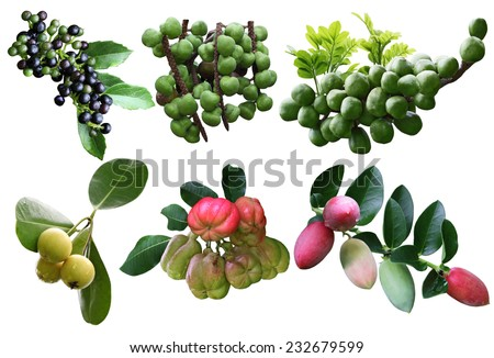 Set of tropical spice fruit isolated on white background - stock photo