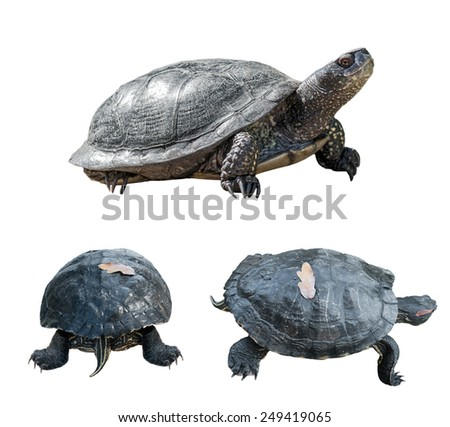 Set of turtles. turtles from different sides. isolated over white background. - stock photo