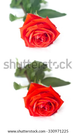 Set of  two Beautiful red roses isolated on white - stock photo