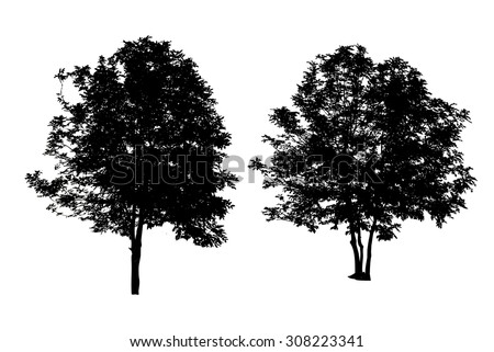 set of two trees silhouette isolated on white background with clipping path - stock photo