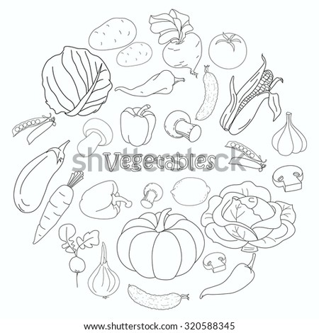 Set of various doodles, hand drawn simple sketches of different kinds of vegetables. Illustration isolated on white background. Collection of Vegetables sketch.