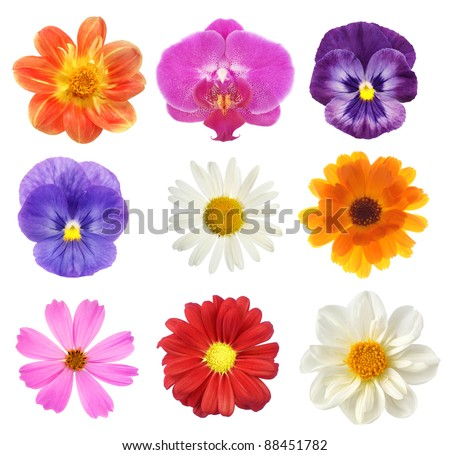 set of various flowers on white background - stock photo