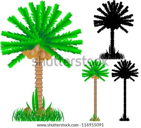 Set of various palms isolated on white background - stock photo