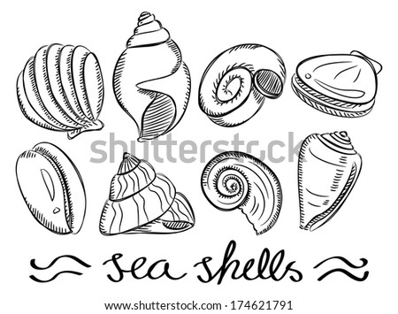 set of various sea shells in doodle style - stock photo