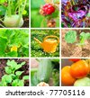set of vegetable garden - stock photo