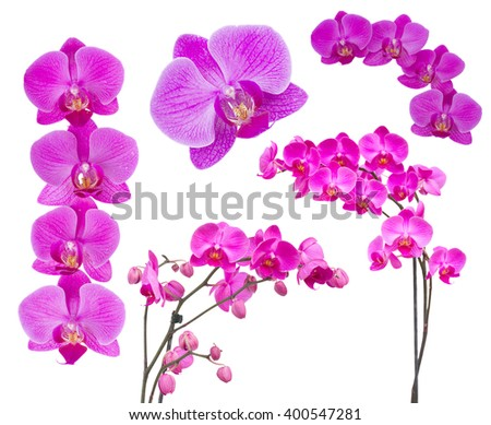 set of violet  flowers of orchid isolated on white background - stock photo