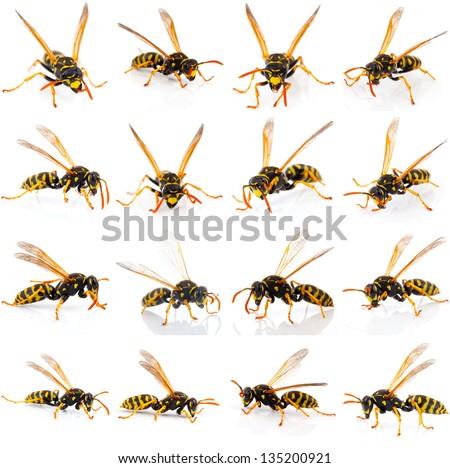 set of wasp isolated on white background - stock photo