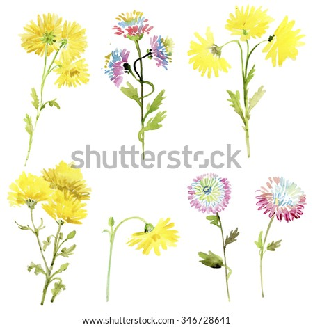 Set of watercolor drawing herbs and flowers, flowers collection for different design over white. Set of watercolor chrysanthemum and leaves - stock photo