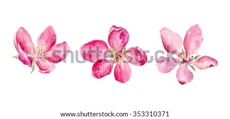 Set of Watercolor illustration of pink Apple and Cherry flowers. Element for design of invitations, movie posters, fabrics and other objects. Isolated on white. - stock photo