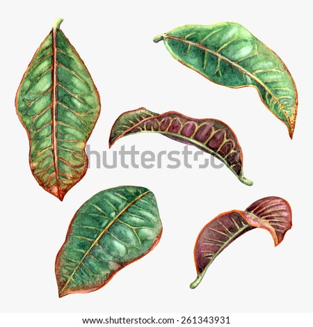 Set of watercolor tropical plants  leaves.  - stock photo