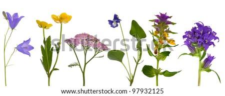 set of wild flowers isolated on white background - stock photo