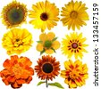 Set of Yellow  Flowers Isolated on White - stock vector