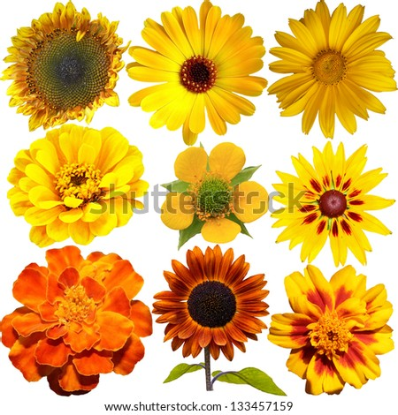 Set of Yellow  Flowers Isolated on White - stock photo