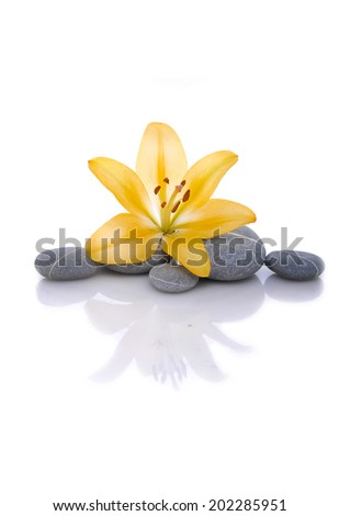 Set of yellow lily with gray stones - stock photo