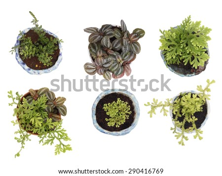 Set of Young green plant isolated on a white background.