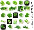 Set of young vegetable- onion, garlic, parsley and letuce.Isolated - stock photo