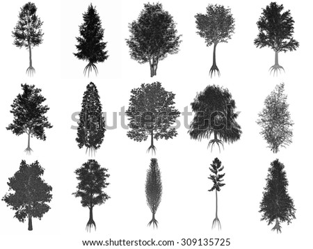 Set or collection of common trees isolated in white background, black silhouettes - 3D render - stock photo