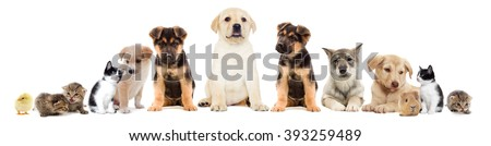set pets - stock photo