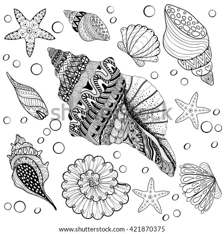 Set Shells, zentangle seeshell for adult anti stress Coloring pages, patterned sea shell, cockleshell illustration for tattoos. hand drawn sketch, Artistically decorative henna print for t-shirt