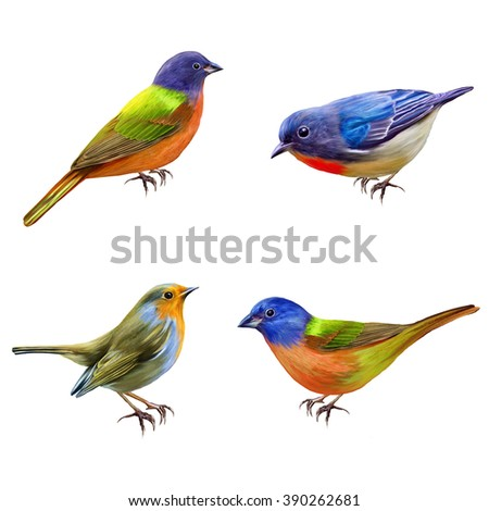 Set. The bright little birds. Isolated. - stock photo