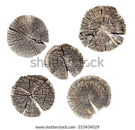 Set tree trunk cross-section isolated - stock photo