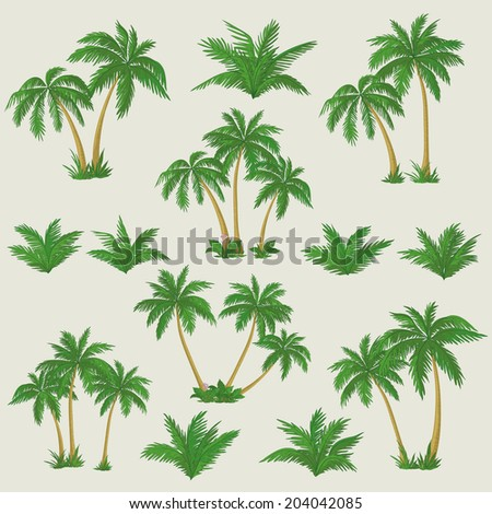 Set tropical palm trees with green leaves, mature and young plants. - stock photo
