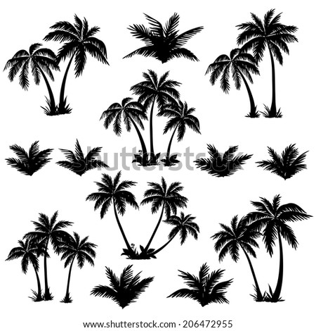 Set tropical palm trees with leaves, mature and young plants, black silhouettes isolated on white background. - stock photo