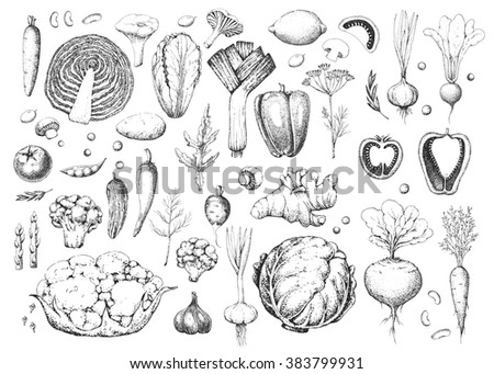 Set vegetables and herbs. Healthy vegetarian food. Vintage black and whitel illustration in the style of engravings. Harvest. Hand drawn food background.