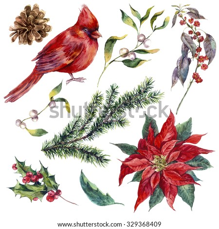 Set vintage watercolor Christmas elements of holly, poinsettia, pinecone, spruce branch and bird red cardinal, watercolor illustration isolated on white background - stock photo