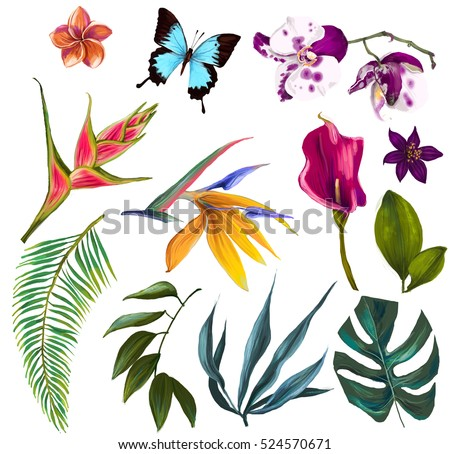 exotic flowers stock images, royaltyfree images  vectors, Beautiful flower