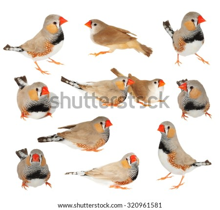 Finch Stock Photos, Royalty-Free Images & Vectors ...