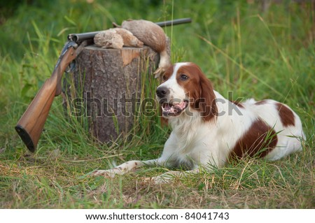 setter and trophies and rifle on grass - stock photo