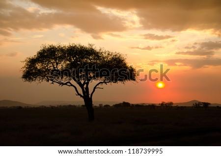 Setting Sun shinning with single Acacia tree in Africa. Beautiful scenery of sunrise / sunset in Serengeti National Park - stock photo
