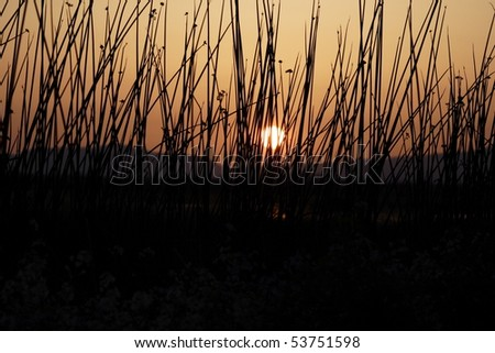 Setting sun through grassland at California wildlife refuge. - stock photo