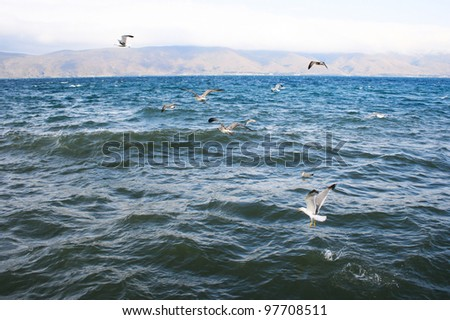 Sevan lake and flying seagulls in foggy day, Armenia.