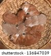 seven little red kittens lying sleeping in wicker basket - stock photo