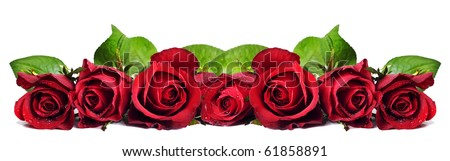 Seven red roses on a white background with space for text - stock photo