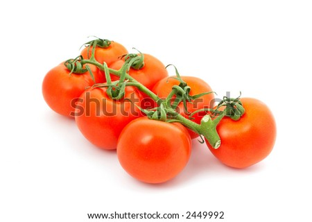 Seven red tomatoes on bunch with shadow - stock photo