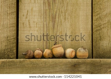 Several acorns are perched on the sidewall of a shed which appears to look like they have gathered on a stage. - stock photo