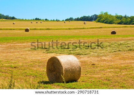 Several bales on a field on a beautiful sunny day with blue sky.