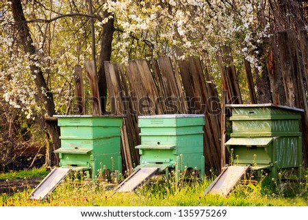 several bee houses in spring sunset time - stock photo