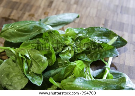 Several bunches of fresh sweet basil ready to be prepared. - stock photo