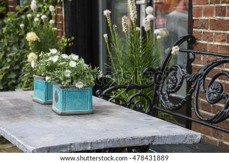 Several chamomiles in blue pots on the grey table with bench near the brick wall