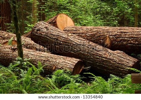 several cut tree trunks laying on the floor of a forest - stock photo