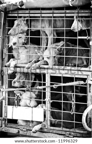 Several dogs confined in a very small cage. - stock photo