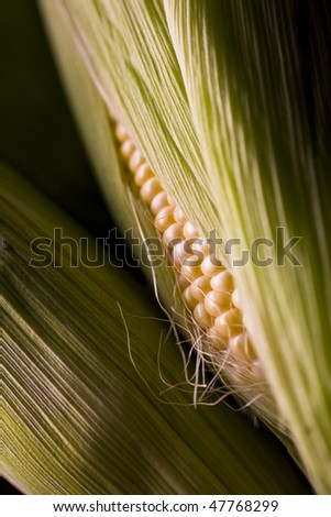 Several ears of corn - stock photo