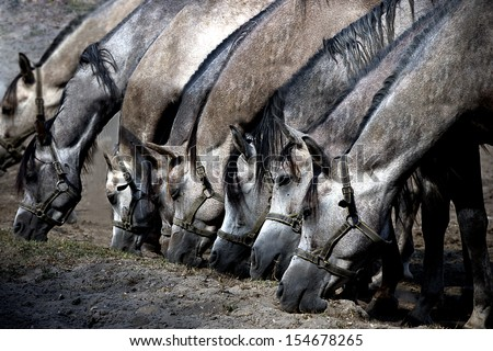 Several horses  eating dry grass  - stock photo