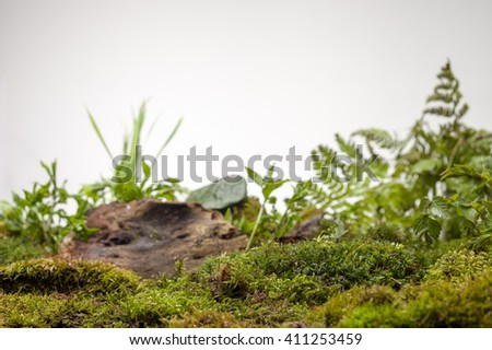 several kinds of forest moss on a white background - stock photo